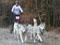Martin s Kasey, Ashley, Amy, Alaskou, Terry a Tessie na závodech
